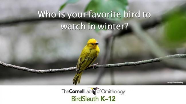 BirdSleuthIWonderWednesdays11.19.14