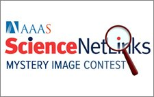 Jan .@ScienceNetLinks Mystery Image Contest